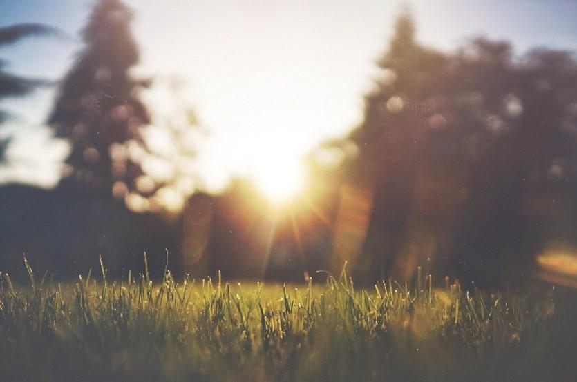 5 redenen waarom je een groene tuin wil